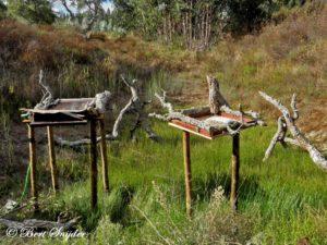 Bird Hide BSP1 Portugal