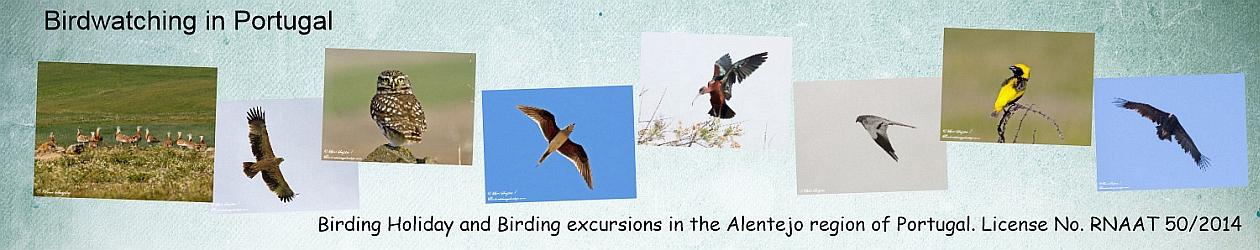 Birding Holiday Portugal