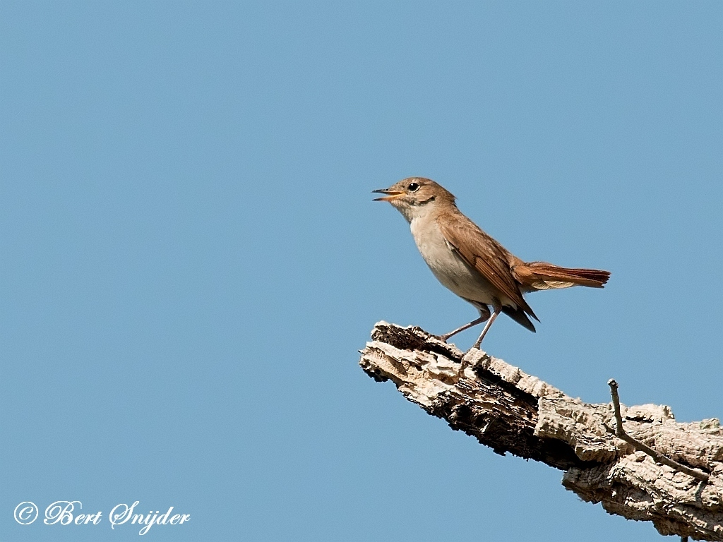Nightingale Birdwatching Holiday Portugal