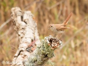 Nightingale Birding Holiday Portugal