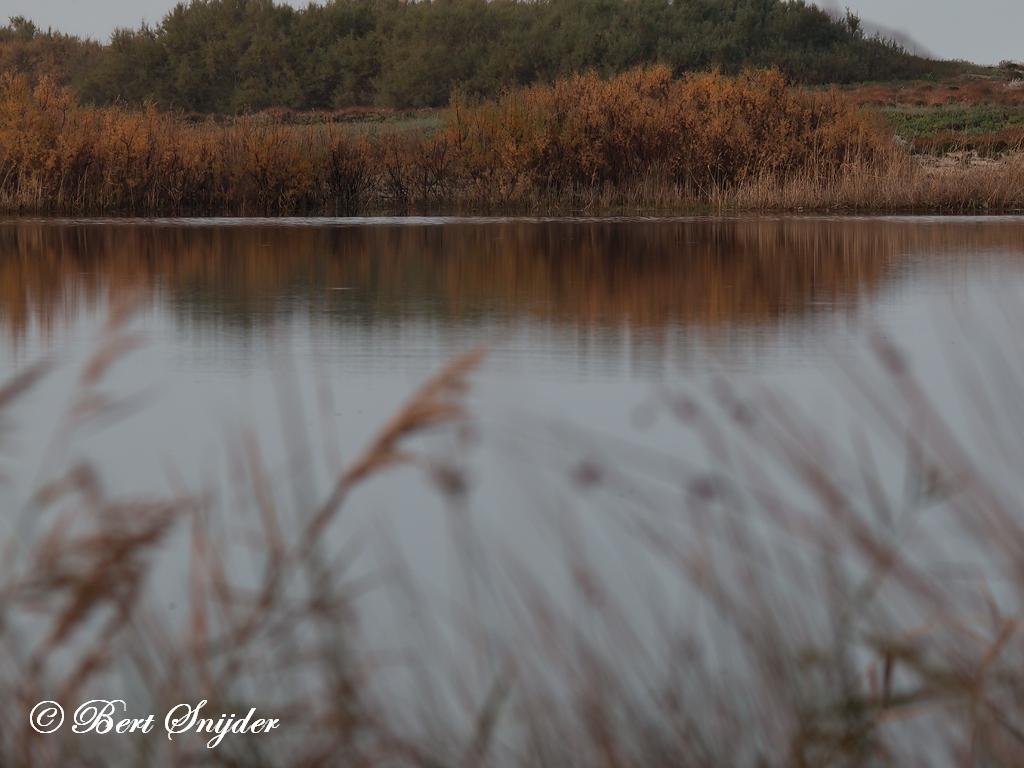 Bird Hide BSP3 Photography Portugal