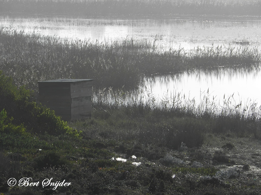 Bird Hide BSP3 Photography Portugal