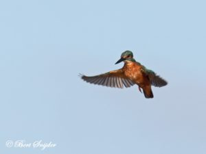 Kingfisher Birding Portugal