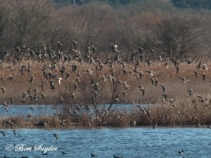 Teal Bird Hide BSP2 Portugal