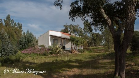 Birdwatching Holiday Casa Oliveira Portugal