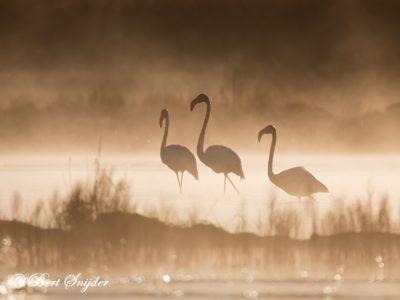 Flamingo Bird Hide BSP2 Portugal