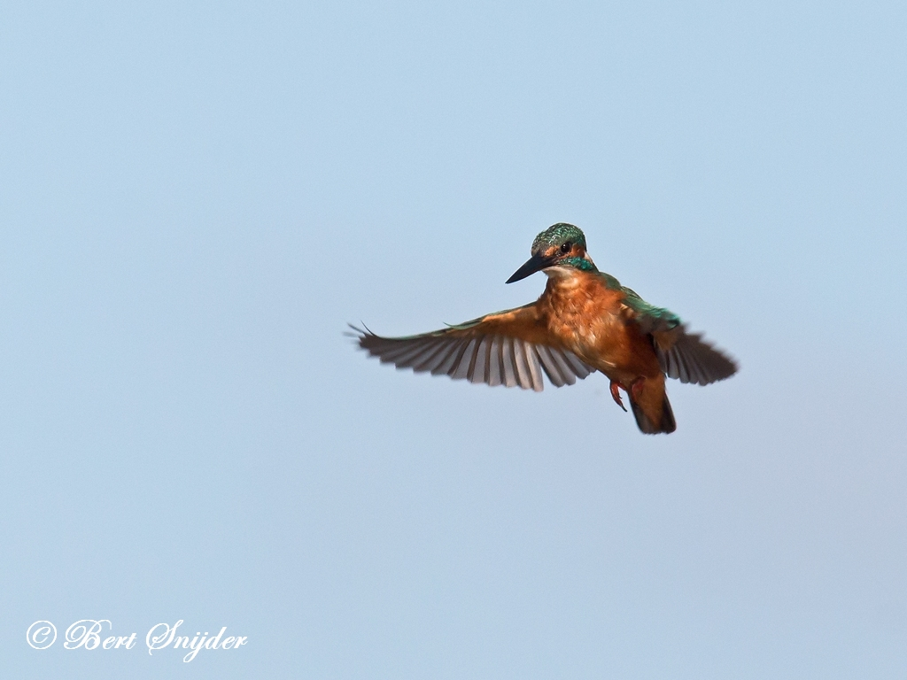 Kingfisher Birding Portugal
