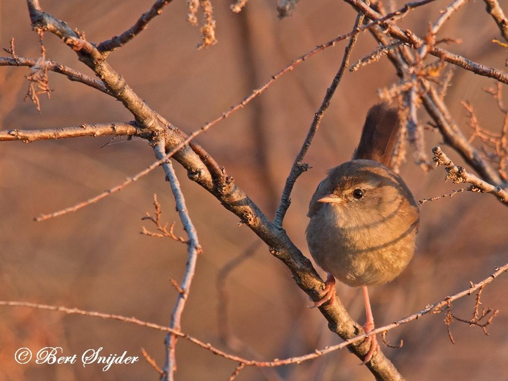 Wren Bird Hide BSP2 Portugal